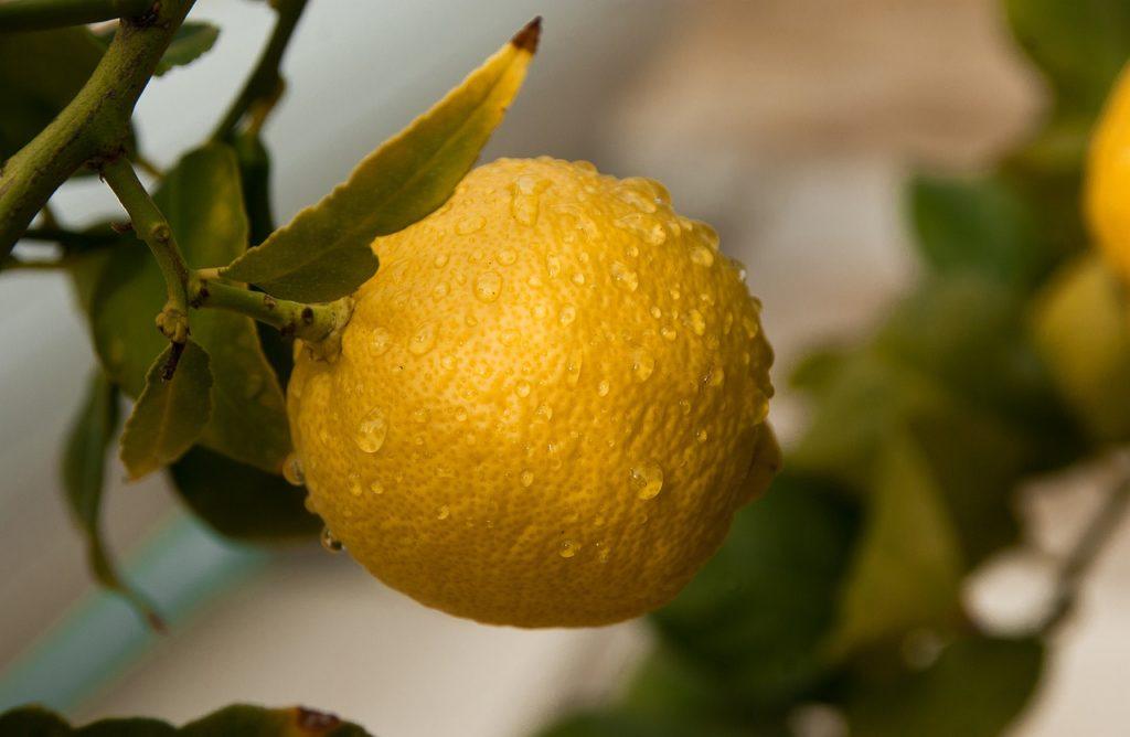 lemon - Purity Chiropractic - Peregian Beach