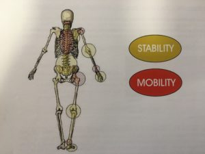 Mobility and stability areas of the body