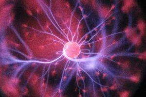 new biology - Purity Chiropractic - Peregian Springs
